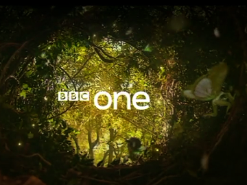 bbc1_forest_360x270